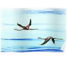 Flamingos in Flight Poster