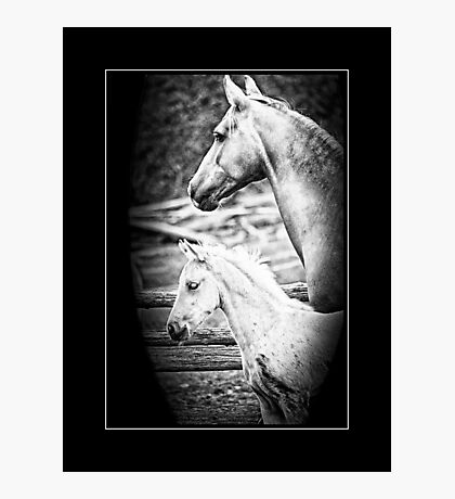 Kallie & Fii  - Mare and Foal Photographic Print