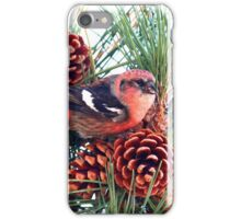 White-winged Crossbill iPhone Case/Skin