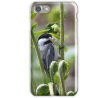 Black-capped Chickadee iPhone Case/Skin