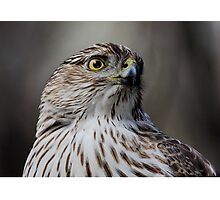Coopers Hawk Photographic Print