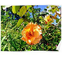Hyde Park Flowers Poster