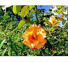 Hyde Park Flowers Photographic Print