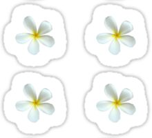 Frangipani - White and Yellow Sticker