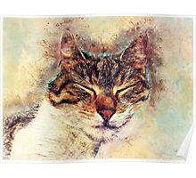 Cat Saba Poster