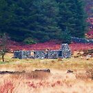 Ruined cottage, Scotland by sarnia2