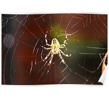 Unique Spider Design Poster