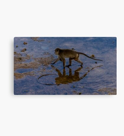 Monkey reflecting time  Canvas Print