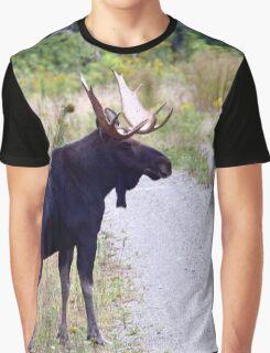 Bull Maine Moose Graphic T-Shirt