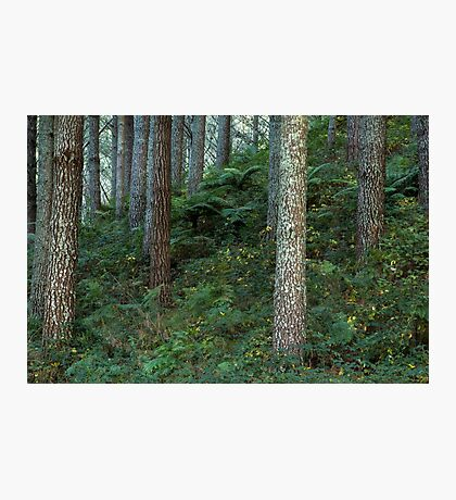 Undergrowth Photographic Print