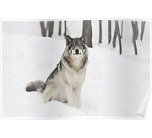 I Am Wolf - Timber  Wolf Poster