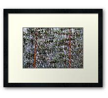 1.5.2014: Sleet and Pine Trees Framed Print
