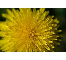 Just Dandy Photographic Print