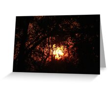 Fiery Sunset Through The Eucalypts Greeting Card