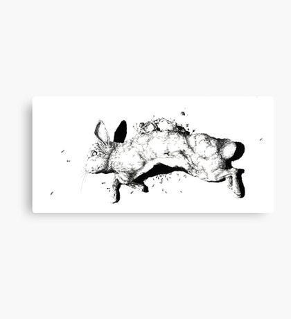 Natural History - Rabbit Canvas Print