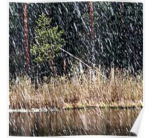 1.5.2014: Sleet, Forest, Pond Poster
