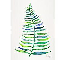 Palm Leaf – Green Palette Photographic Print