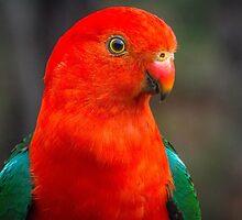 King Parrot by doug hunwick