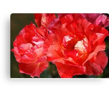 With A Whisper Rose Canvas Print