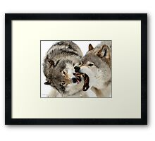 Laying down the law Framed Print