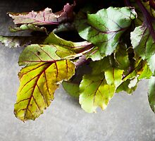 Beet Greens - Gardening Theme by Denise Torres