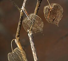 Nature's jewelers  by Jessy Willemse