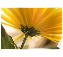 yellow chrysanthemum on a long stem with green leaves Poster