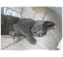 Grey Kitten Relaxed On A Bed Poster