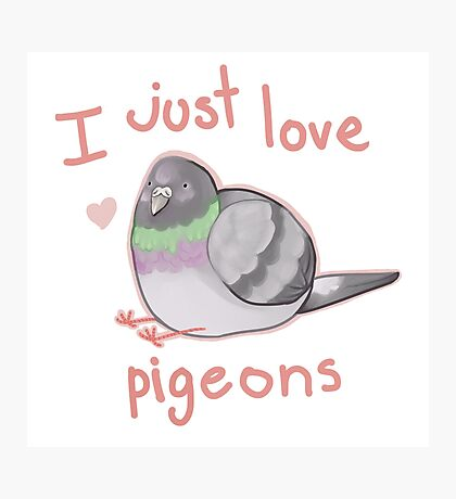 I just love pigeons Photographic Print