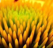 Macro Cone Flower Sticker