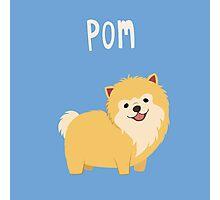 Cute Pomeranian Photographic Print