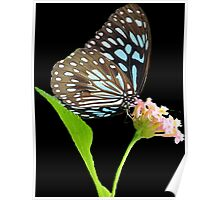 Butterfly 4- Blue triangle Poster