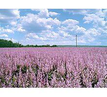 "The big season of a lavender 2. "" The lavender sea"" Photographic Print"