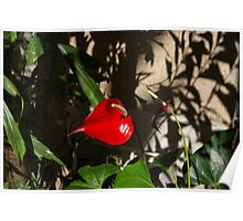 Glossy Scarlet Heart in the Shadows - an Elegant Anthurium Flower Poster