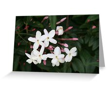 Delicate White Jasmine Blossom with Green Background Greeting Card