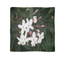 Delicate White Jasmine Blossom with Green Background Scarf