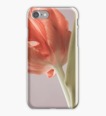 Beautiful tulip close up. Springtime. iPhone Case/Skin