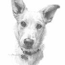 dog portrait drawing by Mike Theuer