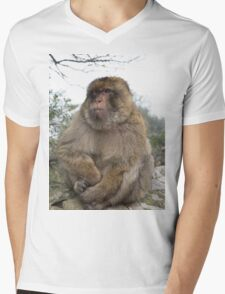 Barbary macaques in Gibraltar Mens V-Neck T-Shirt