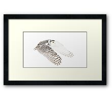 Wings Out - Snowy Owl Framed Print