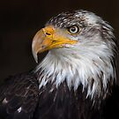 Caged Eagle by Jim Cumming