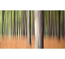 Pine Forest Dream Photographic Print