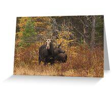 Moose - Algonquin Park, Canada Greeting Card