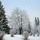Winter-garden by Arie Koene