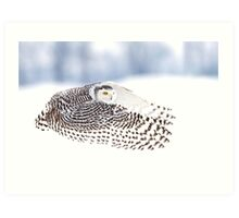 Wings - Snowy Owls Art Print