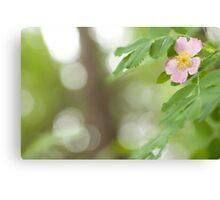 Wild Rose & Morning Dew Canvas Print