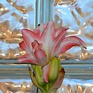 Studies in Glass Brick #4--Amaryllis by Imagery