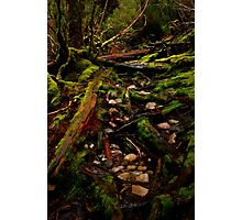 Cradle Mountain National Park Photographic Print