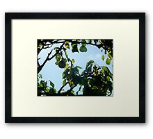 The Partridge Has Flown.. Framed Print