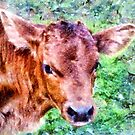 New Born Calf in Romania by Dennis Melling